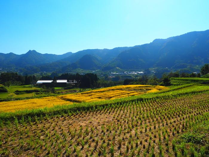 高千穂町。美しい田園風景