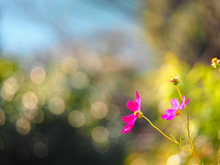 美々川温泉の駐車場に咲いていた花