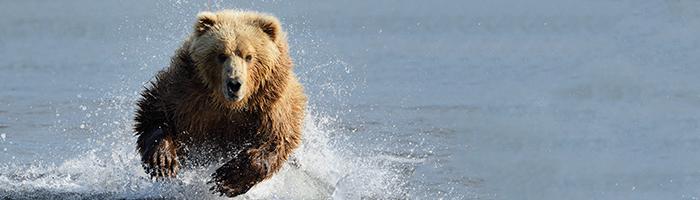 熊より速く走る必要はない(差別化の話)